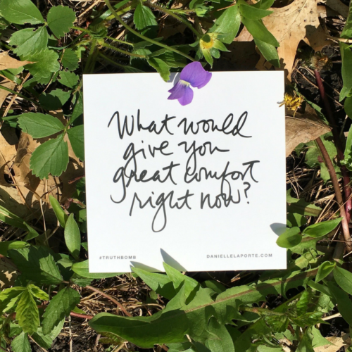 choose violet flower